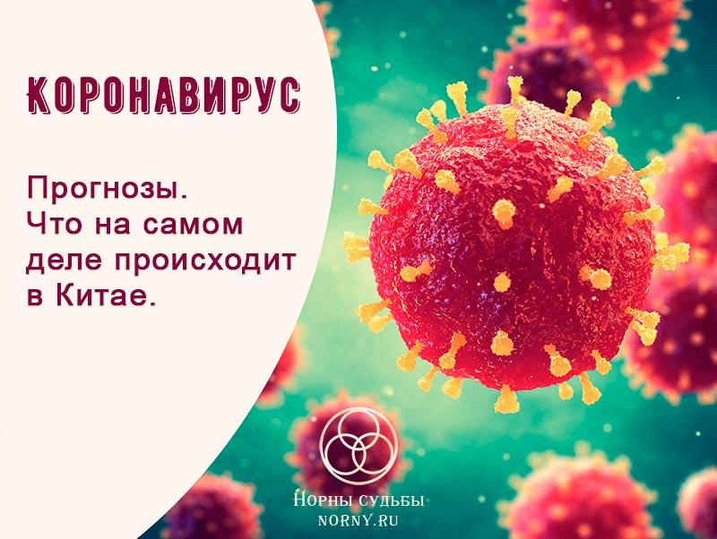 коронавирус, вирусы, прогнозы, предсказания, вирусы в россии, апокалипсис